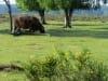 Hilversum - grote grazer